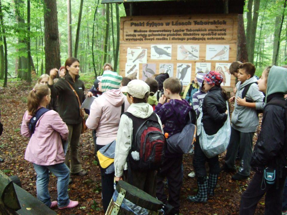 Rezerwat Sosny Taborskiej w Taborzu